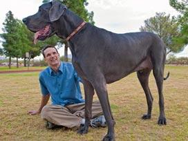 Dünyanın en uzun köpeği galerisi resim 1