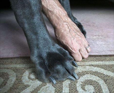 Dünyanın en uzun köpeği galerisi resim 7