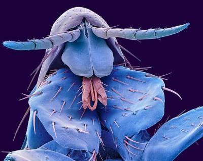 Böceklerin Yakından Görüntüleri galerisi resim 1