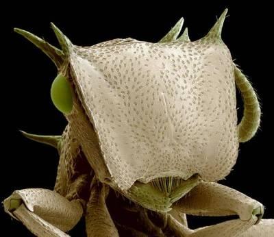 Böceklerin Yakından Görüntüleri galerisi resim 10