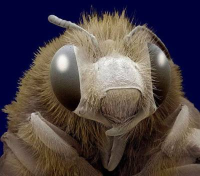Böceklerin Yakından Görüntüleri galerisi resim 11