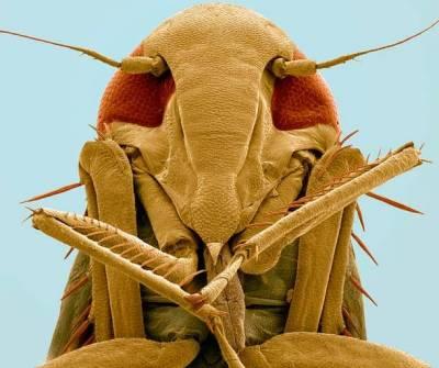 Böceklerin Yakından Görüntüleri galerisi resim 6