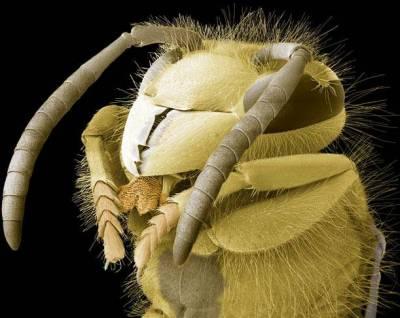 Böceklerin Yakından Görüntüleri galerisi resim 8