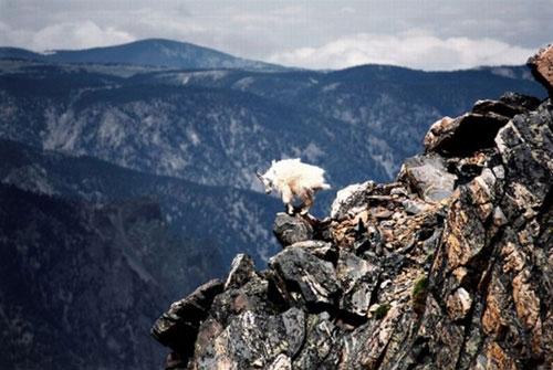 Adı üstünde keçi! galerisi resim 1