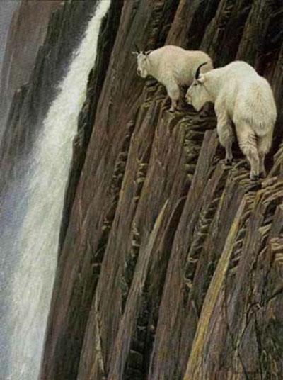 Adı üstünde keçi! galerisi resim 11