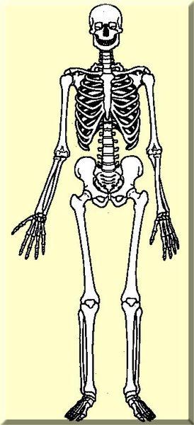 Vücudumuza dair bilmediklerimiz galerisi resim 11