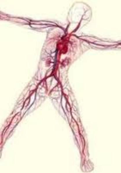 Vücudumuza dair bilmediklerimiz galerisi resim 4