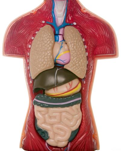 Organ naklinde neler dönüyor? galerisi resim 1