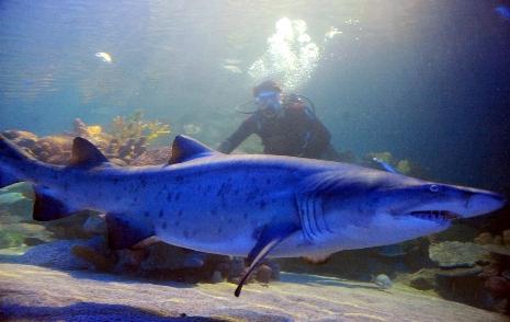 İstanbullu köpekbalığından korkmuyor galerisi resim 1