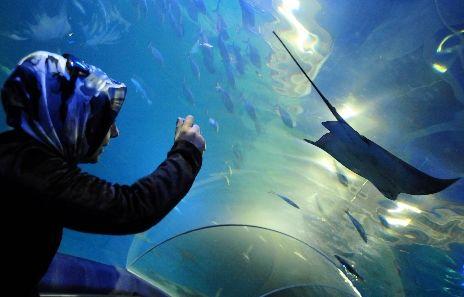 İstanbullu köpekbalığından korkmuyor galerisi resim 2