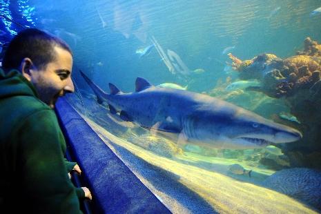 İstanbullu köpekbalığından korkmuyor