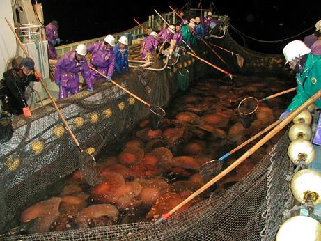 200 Kiloluk denizanası dehşeti... galerisi resim 10