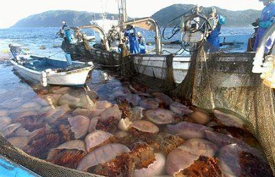 200 Kiloluk denizanası dehşeti... galerisi resim 3