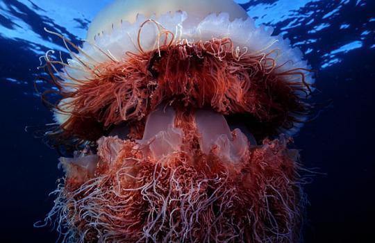 200 Kiloluk denizanası dehşeti... galerisi resim 6