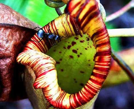 Böcek yiyen bitkiler galerisi resim 21