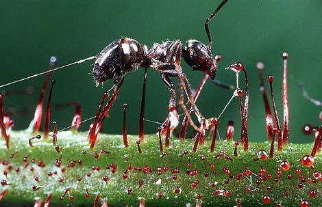 Böcek yiyen bitkiler galerisi resim 25