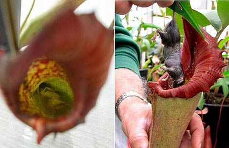Böcek yiyen bitkiler galerisi resim 5