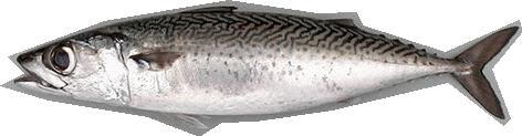Hangi Balığı Hangi Ayda Yemeli? galerisi resim 10
