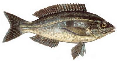 Hangi Balığı Hangi Ayda Yemeli? galerisi resim 11