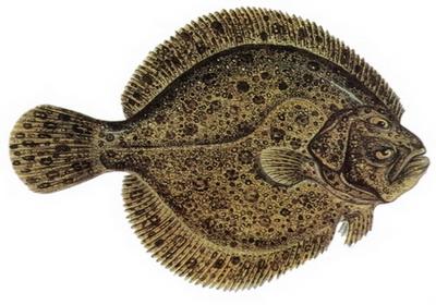Hangi Balığı Hangi Ayda Yemeli? galerisi resim 12