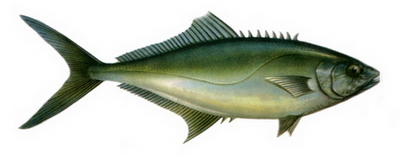 Hangi Balığı Hangi Ayda Yemeli? galerisi resim 14