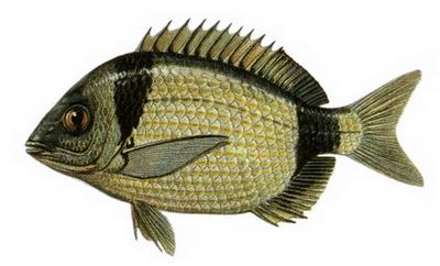 Hangi Balığı Hangi Ayda Yemeli? galerisi resim 15
