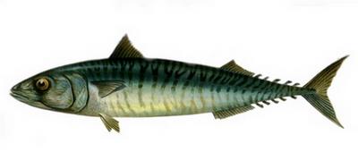 Hangi Balığı Hangi Ayda Yemeli? galerisi resim 2