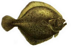 Hangi Balığı Hangi Ayda Yemeli? galerisi resim 3