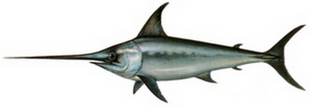 Hangi Balığı Hangi Ayda Yemeli? galerisi resim 5