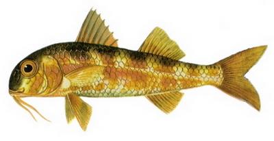 Hangi Balığı Hangi Ayda Yemeli? galerisi resim 6