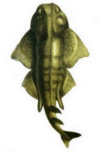 Hangi Balığı Hangi Ayda Yemeli? galerisi resim 7