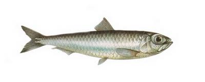 Hangi Balığı Hangi Ayda Yemeli? galerisi resim 8