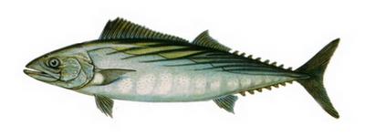 Hangi Balığı Hangi Ayda Yemeli? galerisi resim 9