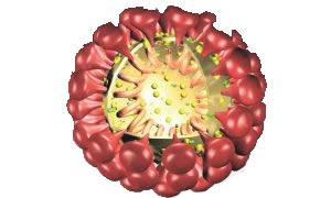 'Corona virüsü'ne yakalanan 30'uncu kişi de hayatını kaybetti