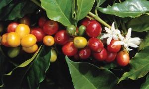 Kahve endişe seviyesini azaltarak depresyonu önlüyor