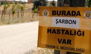 Bitlis'te 9 köy şarbondan karantinaya alındı