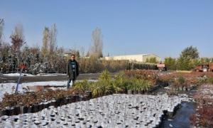 Bu üniversite kendi bitkisini kendisi üretiyor