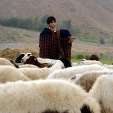 Hacettepe Tıp Fakültesi'ni kazanan çobana yardım ve burs yağıyor