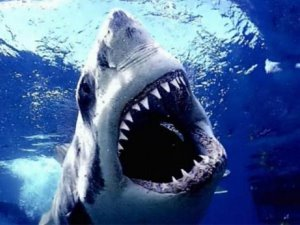 Sağlık Bakanlığı 'köpekbalığı kıkırdağı' hakkında uyardı!