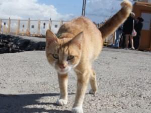 Engelli vatandaşın engelli kedisi yaşama azmiyle şaşırtıyor