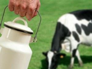 'Zeki olmak için her gün 2 bardak süt şart'