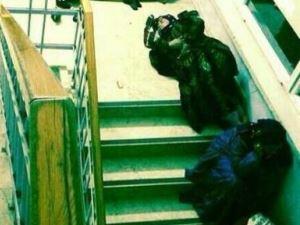 Şanlıurfa Kadın Doğum Hastanesi'nde refakatçilerin hastane merdiveninde yattığı iddiası
