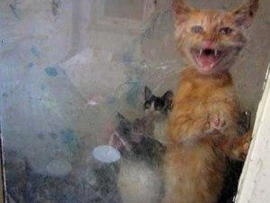 Bursa'da aç bırakılan 20 kediyi ormancılar kurtardı