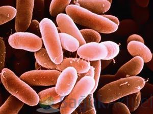 Makedonya'da listeria bakterisi 4'üncü can aldı