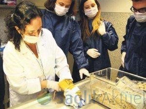 Tıp Fakültesi öğrencileri risk altında