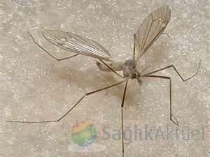 Tıp Fakültesi Hastanesini sinekler bastı