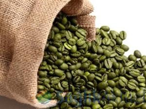 Sağlıklı yaşam kaynağı; yeşil kahve