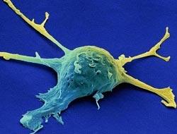 Mantardan kanser ilacı