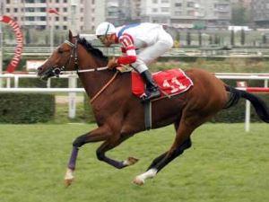 Atlar koştu, organ bekleyenler kazandı!