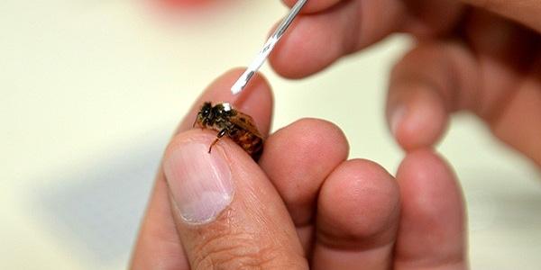 Kas hastalıklarına arı zehri ile tedavi